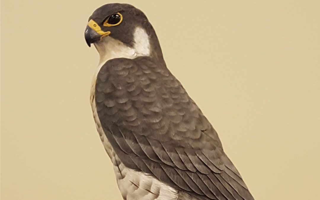 Carving a Peregrine falcon