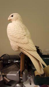 bird carving, peregrine falcon, wood carving, sculpting, wildlife art, birds of prey, raptors, fine art