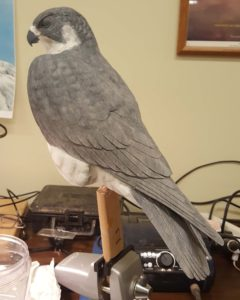 wood carving, sculpting, wildlife art, wildlife carvings, peregrine falcon, raptors, birds of prey
