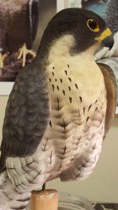 wood carving, wood sculpting, peregrine falcon, wildlife art, fine art, raptors, falcons,