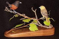 Finished Orchard Orioles 1